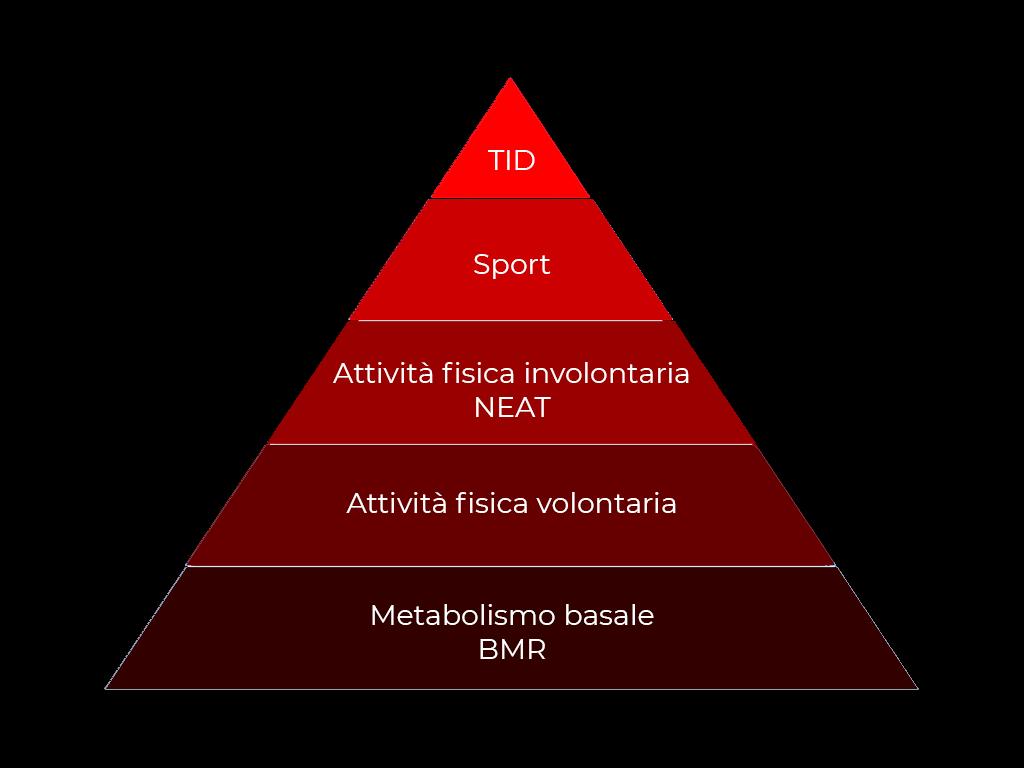 Metabolismo 01